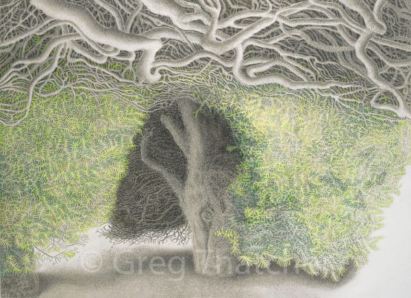 Yew Trees #118 - Greg Thatcher