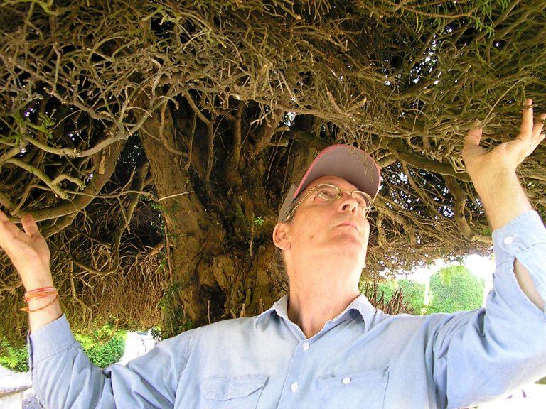 Greg Thatcher Under Yew Tree