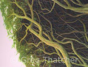 Yew Boughs #2 - Greg Thatcher Gallery