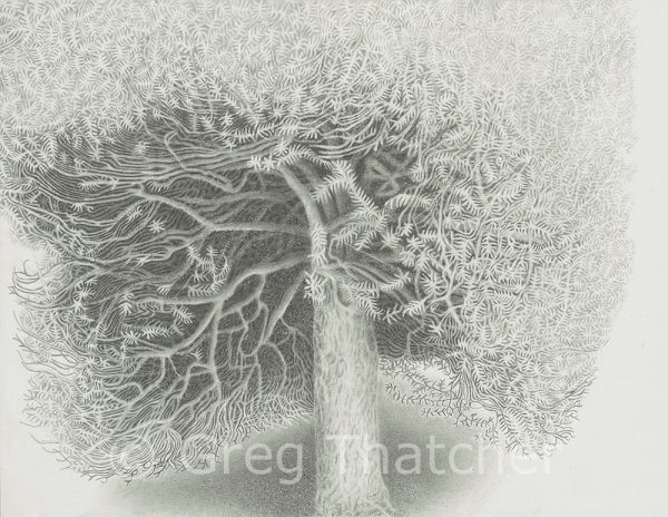 Yew Trees #119 BW - Greg Thatcher