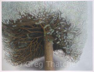 Yew Trees #119 Darker - Greg Thatcher